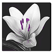 Printed Botanical White Flowers Canvas Art with Stretched Frame